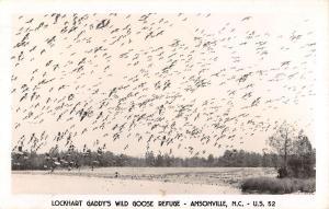 Ansonville North Carolina Goose Refuge Real Photo Antique Postcard K33391