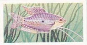 Mitchum Foods Vintage Trade Card Aquarium Fish 1957 2nd Series No 33 Three Sp...