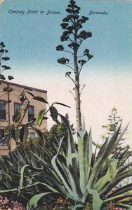 Century Plant in Bloom, Bermuda,  00-10s