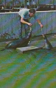 Massachusetts Boston Harbor Seals New England Aquarium Central Wharf