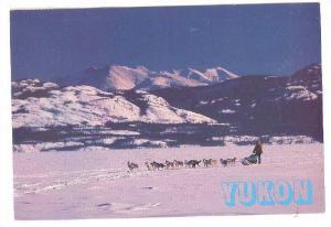 Dog Teams During Winter Months, Yukon, Canada, PU-1995