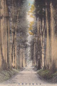 The Japan Cedar Avenue (The Road For Nikko), NIKKO, JAPAN, 1900-1910s