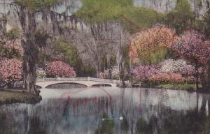 South Carolina Charleston Magnolia Gardens Albertype Handcolored