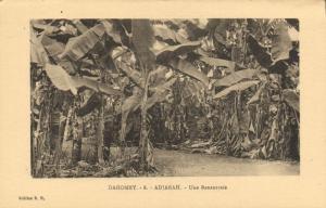 CPA Dahomey Afrique - Adjarah - Une Bananeraie (86818)