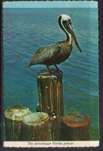 Florida Pelican BIN