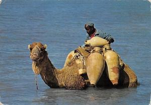 Tunisia Djerba It's not the sea to drink, sea, camel, island