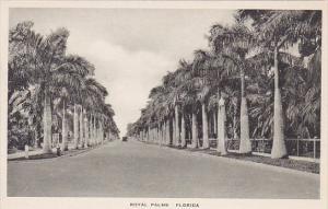 Florida Royal Palms Albertype