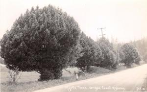 COLUMBIA RIVER HWY OREGON~MYRTLE TREES~PATERSON #709 REAL PHOTO POSTCARD