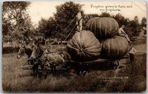 1910 Nebraska EXAGGERATION Comic Postcard  Pumpkins Grown in Nebr. Soil Martin