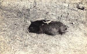 St Cloud FL Florida Native Animals RPPC Postcard
