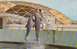 Florida St Petersburg Aquatarium Double Porpoise Jump