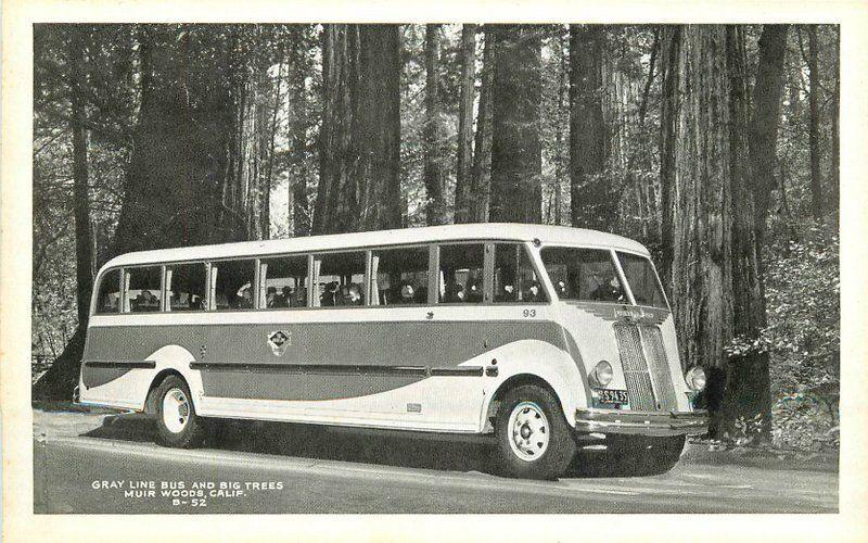 Bardell 1930s Gray Line Bus Big Trees Muir Woods California postcard 12238