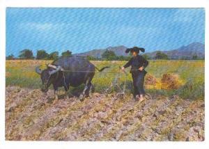 New Territories farming women in Hakka hats, 50-70s