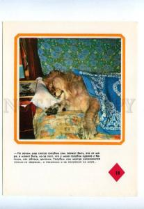 143470 BAKU CIRCUS LION King Berberov Family Sleeping Old #11