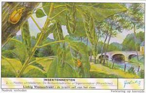 Liebig Trade Card Insect Nests No 2 Rhynchites