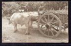 Ox Cart,Caretta Mexico