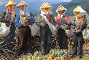 Southern Taiwan China, People's Republic of China Pineapple farmers Southern ...