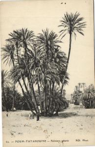 CPA TUNISIE FOUM-TATAHOUINE - Palmiers geants (133958)