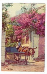 Donkey Cart, Nassau, Bahamas, 00-10s
