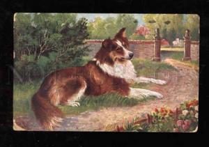 021515 Little COLLIE on Grass. Sign. Vintage colorPC