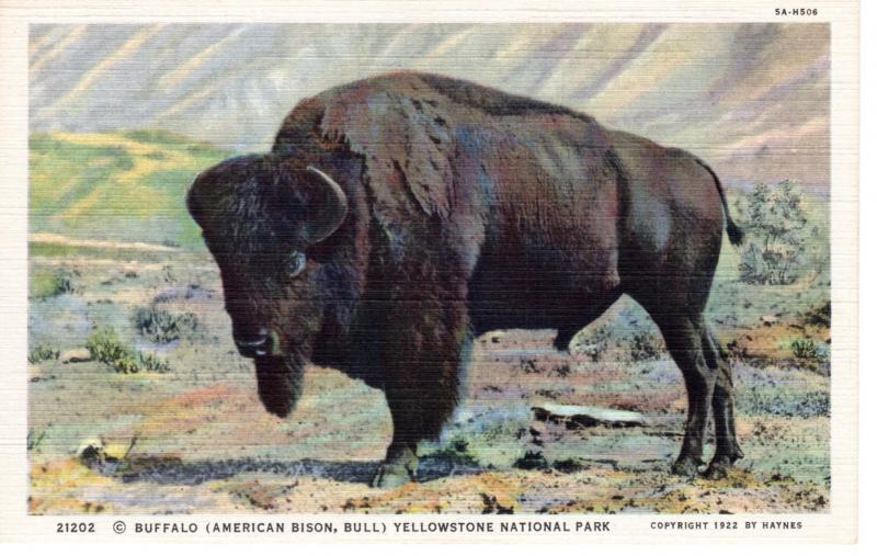 YELLOWSTONE NATIONAL PARK Haynes Linen Series. 21202.