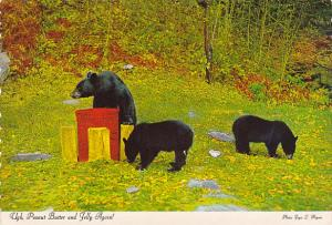 Arkansas Bears Ugh Peanut Butter and Jelly Again