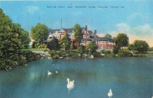 Dallas Texas~Swans Swim at Dallas Golf And Country Club~1940s Postcard
