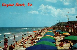 Virginia Virginia Beach Sun Bathers