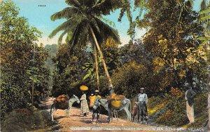 Jamaica, Jamaique Post card Old Vintage Antique Postcard Scene on Bog Walk Ne...