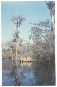 Okefenokee Swamp, Gerogia, 40-60s