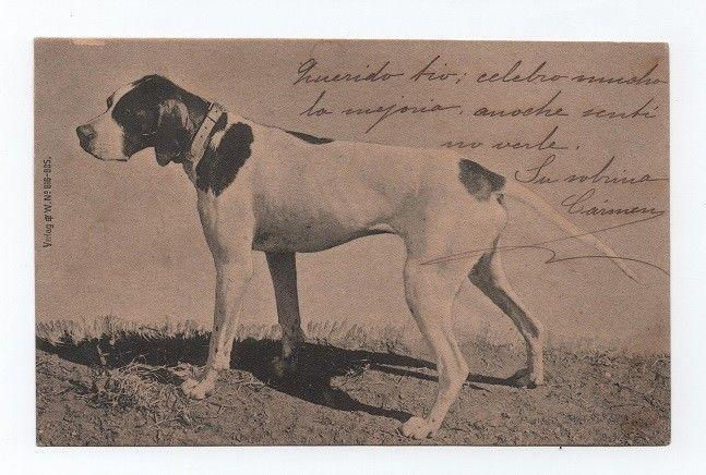 POSTCARD 1900 year DOGS DOG CHIEN HUNTER DOG CHIENS HUNDE HUND