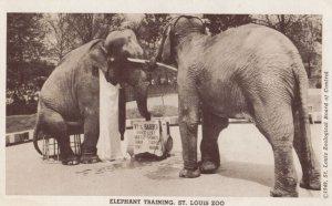 RP: Elephant Training at ST LOUIS Zoo , Missouri , 1940s