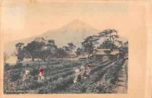 Shizuoka Japan Tea Gardens Mount Fuji Antique Postcard J46973