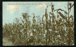 Security Texas tx Cornfield Security Land Tract 1910 postcard
