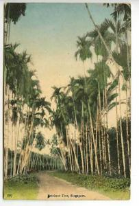 Singapore China Betelnut Tree Postcard