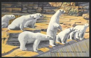 Polar Bear Dens Exhibit Zoological Park Detroit Michigan Unused c1940s