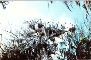 Chrome ANIMALS SCENE Immokalee - Near Fort Myers Florida FL AH8649