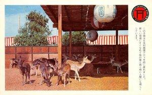 Japanese Village & Deer Park Buena Park, CA Fawns c1960s Vintage Postcard