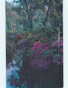 1984 postcard SHADE GARDEN SCENE La Canada California CA hn4708