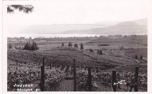RP; Bird´s Eye View, Vineyard, Kelowna, British Columbia, Canada, 10-20s