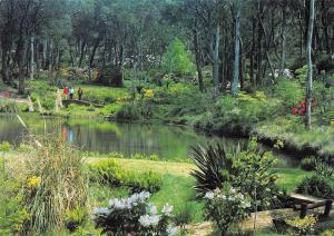 BR101896 blue mountains rhododenron society s garden blackhealth nsw   australia