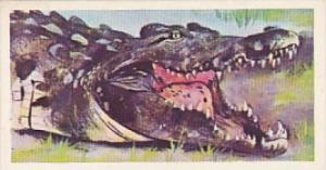Brooke Bond Vintage Trade Card Wonders Of Wildlife 1976 No 30 Nile Crocodile ...