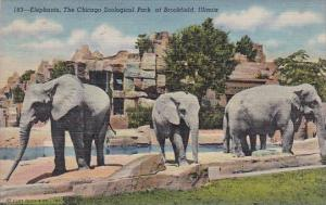 Elephants At The Chicago Zoological Park Brookfield Illinois Curteich 1947