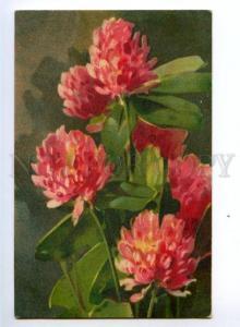 148551 CLOVER Flowers By C. KLEIN vintage PC
