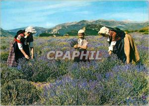 Postcard Modern Folklore Collection Provencal lavender