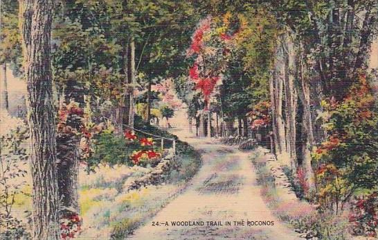 Pennsylvania Stroudsburg A Woodland Trail In The Poconos