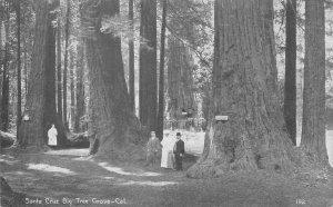 Santa Cruz Big Tree Grove, California Redwoods ca 1910s Vintage Postcard
