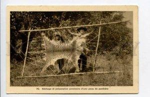 424030 VIETNAM panther leopard hunting stretched skin Vintage SAIGON postcard