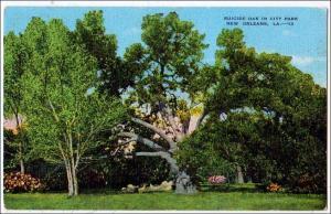 Suicide Oak, New Orleans LA