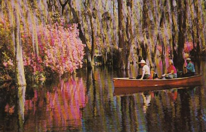 South Carolina Charleston Boating In Cypress Gardens